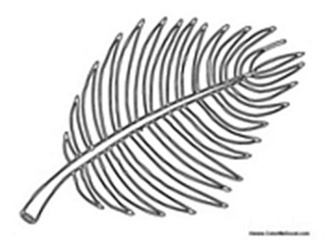 Palm Sunday Palm Tree Branch Palm Leaves Coloring Pages