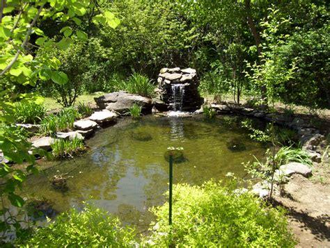 backyard trout pond ponds water gardens