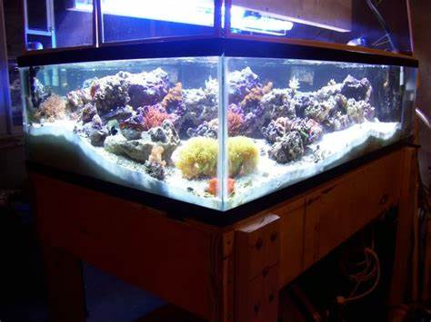 150 Gallon Aquarium 150 Gallon Fish Tank Dimensions