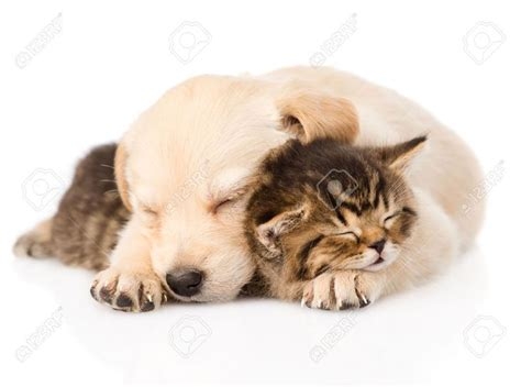baby puppies and kittens 11 best puppies and kittens images on animal babies baby puppies and