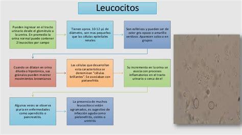 analisi sedimento urinario analisis microscopico sedimento urinario