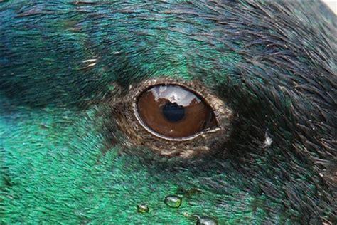 reflection in the eye duck: dpas11: galleries: digital