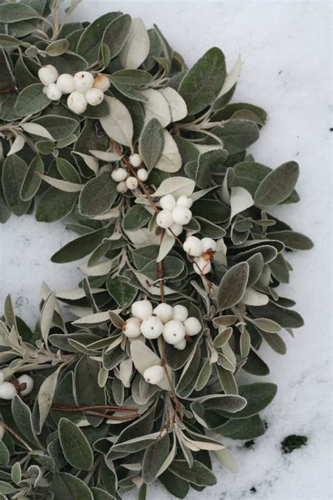 mistletoe wreath winter pinterest
