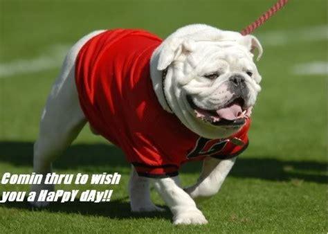 Englische Kaufen 179 by The 25 Best Bulldog Happy Birthday Ideas On