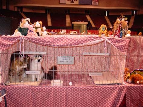 cat show drapes cat show cage curtains curtains blinds