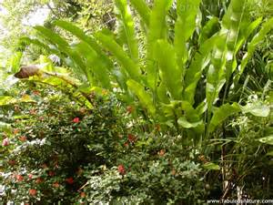 flowers and gardens pictures tropical ferns flowers