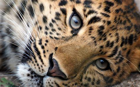 Fonds d'écran Animaux Sauvages Afrique