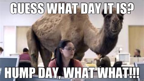 Camel Hump Day Meme - hump day camel meme