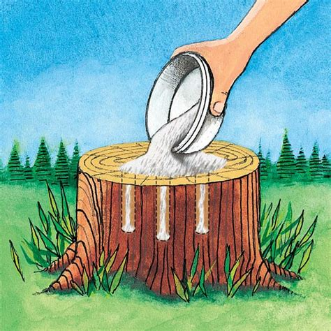 what to water your tree with 5 ways to remove a tree stump 171 patio supply outdoor living