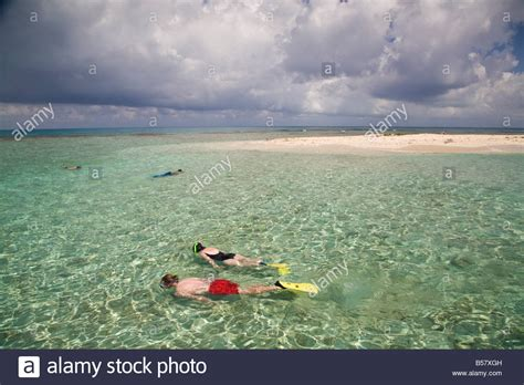 bird island belize tourists snorkelling bird island belize central america