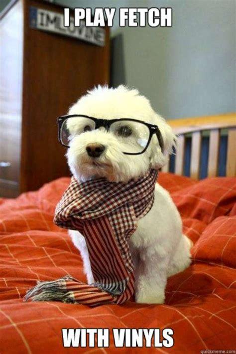 Cutest Animal Memes - funny dog memes 12 pics