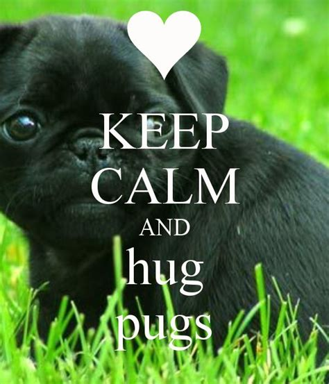 video the black hug thug slugs another young woman in 1000 images about pugs on pinterest we heart it keep
