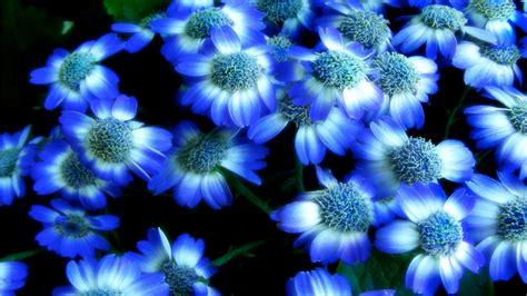 blue lotus flower high nature flowers blue lotus hd