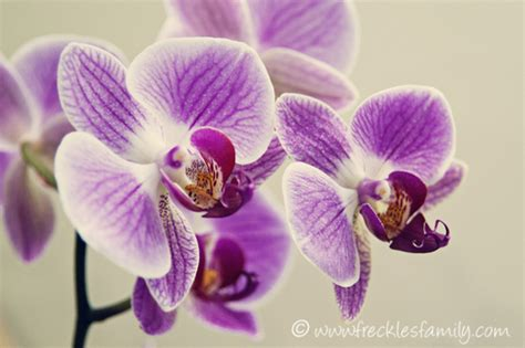 how to get an orchid to re bloom pinaddicts challenge