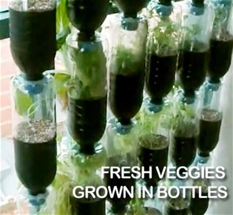 genius in a bottle pet bottle vertical garden s o paulo recycled plastic bottles awesome vertical vegetable garden