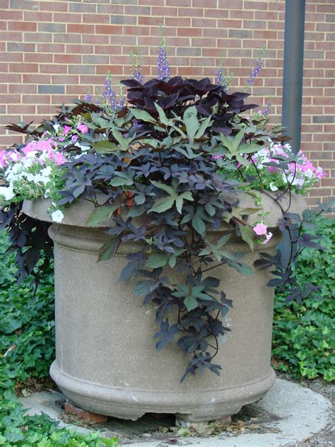 plant profile plant combinations for your containers
