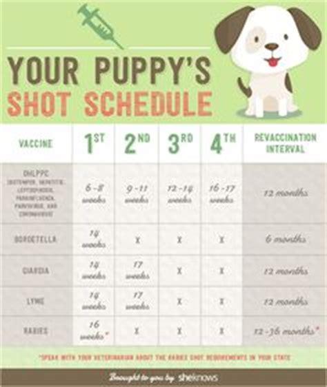 new puppy schedule 1000 ideas about puppy schedule on puppy crate new puppy and new puppy