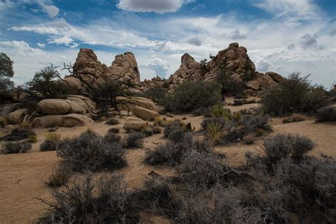 Joshua Tree joshua tree national park pictures aol image search results