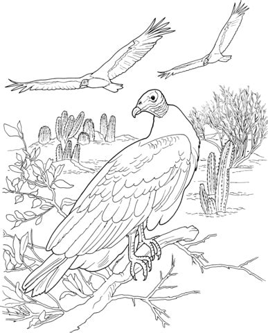 turkey vulture coloring page turkey vultures in a desert coloring page super coloring
