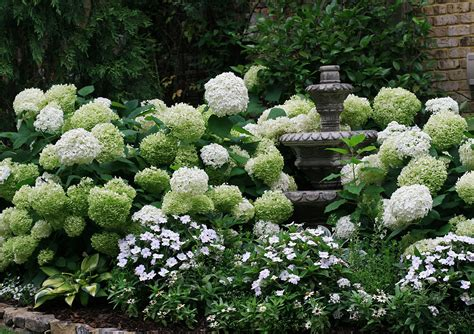 Landscape Pictures With Hydrangeas Annabelle Hydrangea The Graceful Gardener