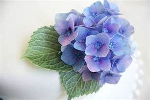 Easy Cake Decorating Edible Wafer Paper Hydrangea Fowers Felt