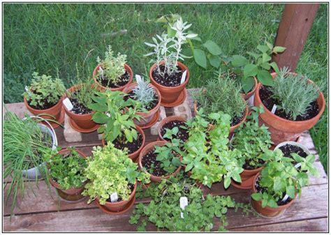 herb pots outdoor garden of steph container herb gardens