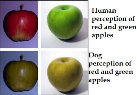 how do dogs see color can dogs see colors daily discoveries