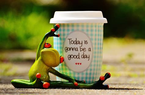 beautiful images for day free photo beautiful day frog coffee free image