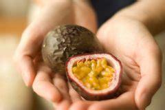 wann ist papaya reif ist die passionsfrucht reif 187 daran erkennen sie es