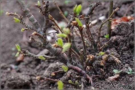 blumen und pflanzen blumen u pflanzen
