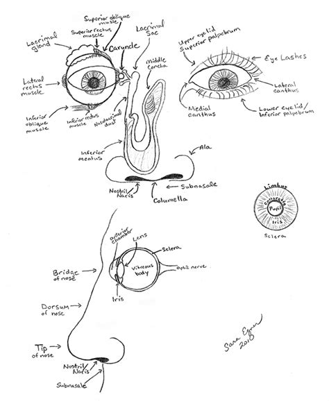 eye anatomy coloring page free eye anatomy coloring pages