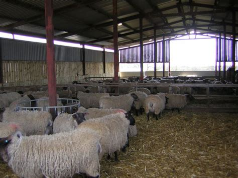 Sheep Lambing Sheds by 1000 Images About Livestock Housing On