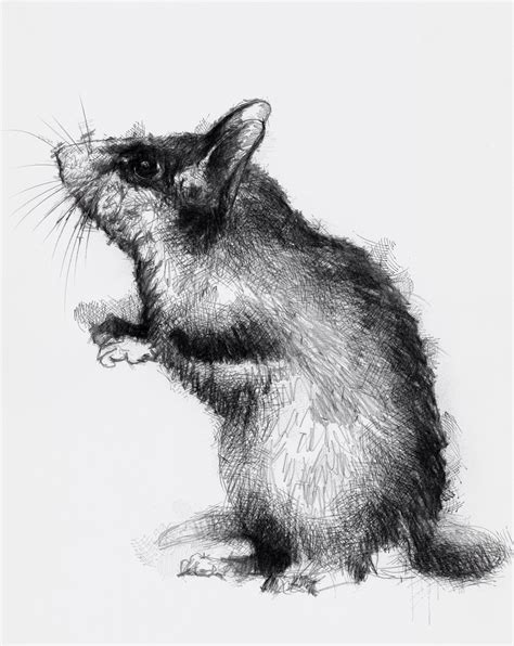 In Dormouse Drawing by Dormouse Seanbriggs