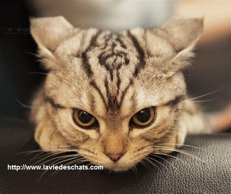 un nouveau chat arrive les 5 trucs 224 ne pas