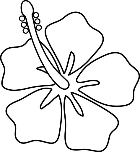 images to draw flowers design how to draw with color