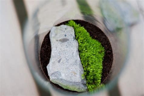 Ou Trouver De La Mousse Pour Terrarium by Fabriquer Mini Terrarium D 233 Coratif En 5 D 233 Marches