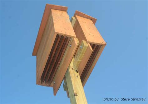 bat house design the benefit of bats in the landscape