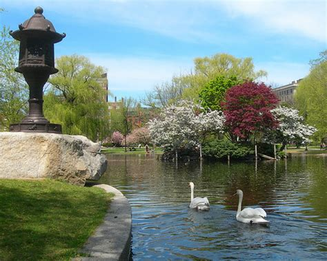 Garden Boston by Swans In The Boston Garden Flickr Photo