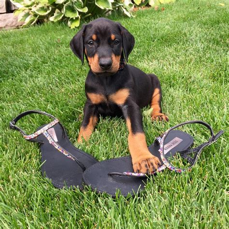 and baby baby summit and baby rory want your shoes to help homeless doberman and children