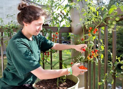 Jual Polybag Pot cara menanam tomat dalam pot atau polybag bibitbunga