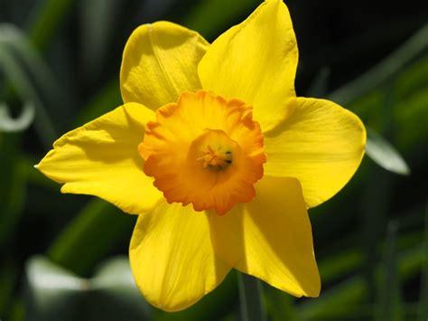 lista nomi fiori elenco nomi di fiori lista nomi fiori nomi dei fiori
