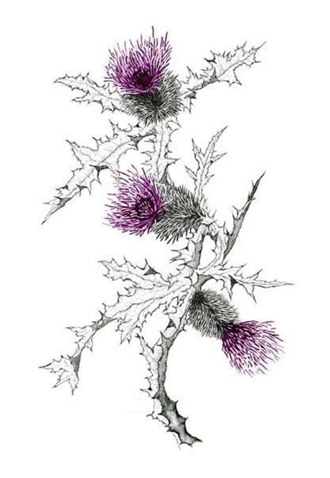 scottish thistle tattoo idea best tattoo ideas