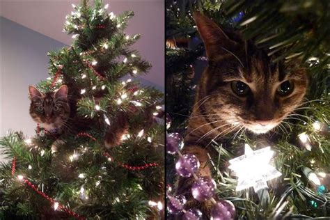 cats love christmas trees animals