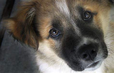pound puppy rescue o jpg