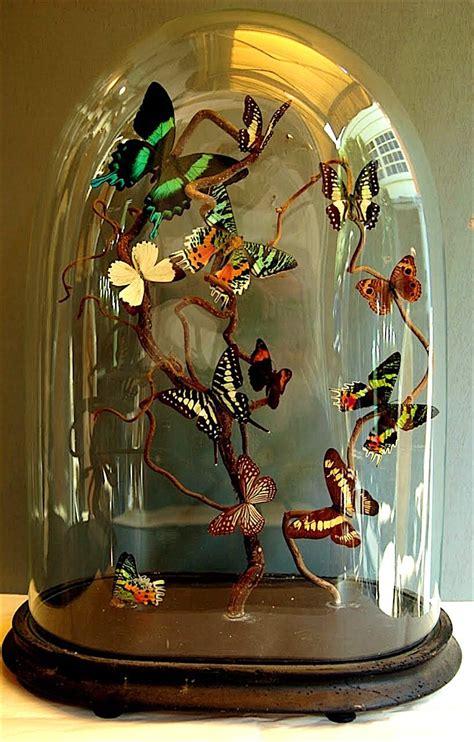 cabinet de curiosit 233 cloche dome d 244 mes de verre