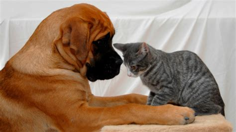 do dogs their owners study dogs their owners 5 times more than cats do