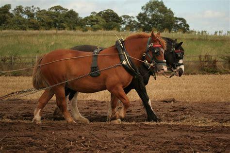 wann sind die wechseljahre zu ende seit wann sind pferde nutztiere f 252 r die menschen was