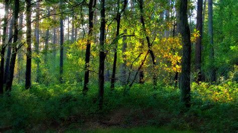 wallpaper alam hutan nature wallpaper hutan olivedrab cadetblue darkkhaki