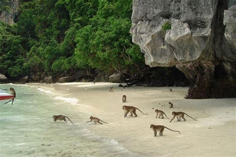 Monkey Beach (Yong Gasem Beach) | Bangkok Post: Travel