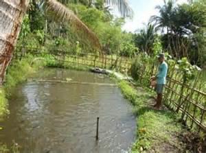 backyard fish farming philippines 2017 2018 best cars